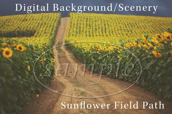 Image of Sunflower Field Path Digital Background/Digital Photo