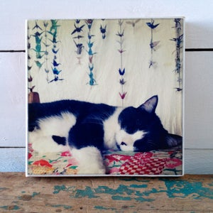 Image of Cat Nap Print On Wood