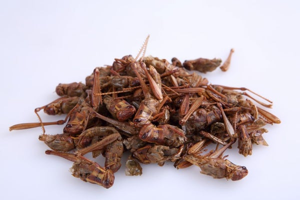 Image of Thai Edible Grasshoppers 100 grams