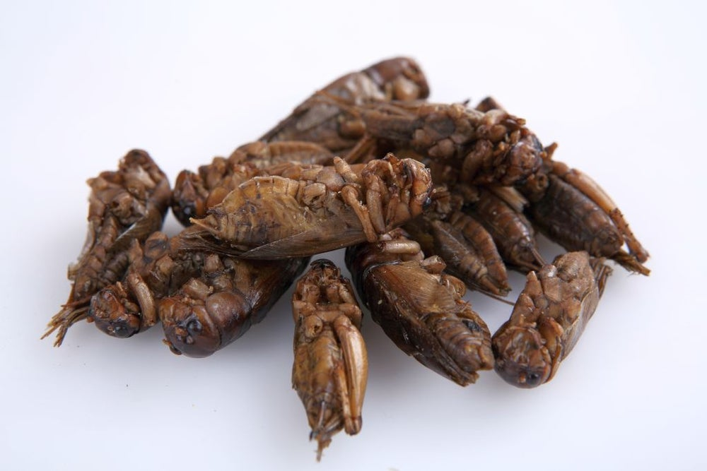 Image of Thai Edible Giant Crickets 100 grams