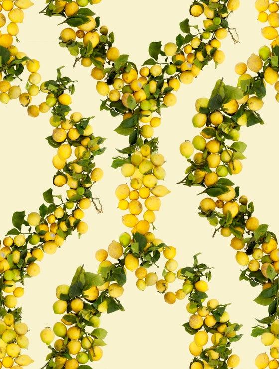 Image of Fallen Fruit, Lemon Wallpaper (Yellow Background)
