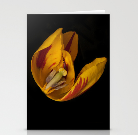 Image of Petal Disected Card