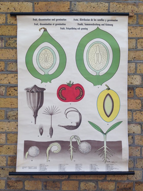 Image of Vintage School Botanical Poster - Fruit Dissemination & Germination