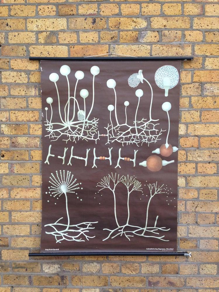 Image of 1970 Hagemann Botanical Poster