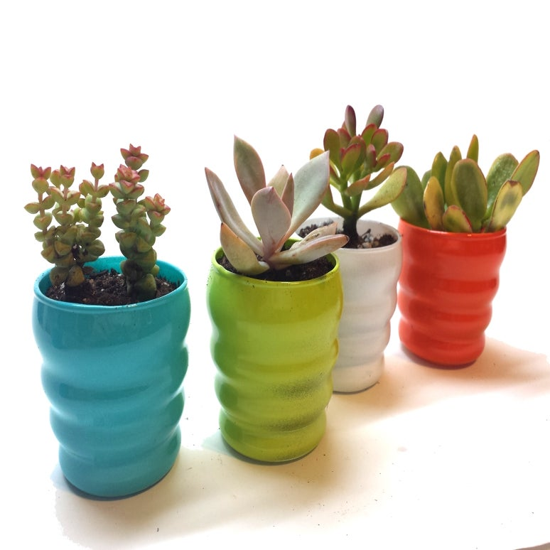 Succulents In Colorful Mini Glass Planter Set Of 4