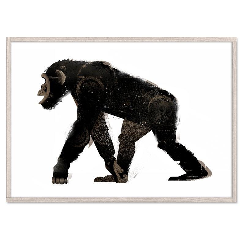 Image of Chimp