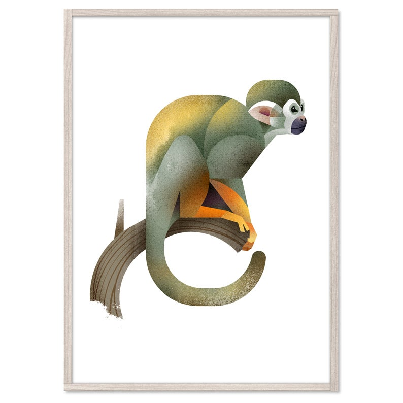 Image of Squirrel Monkey