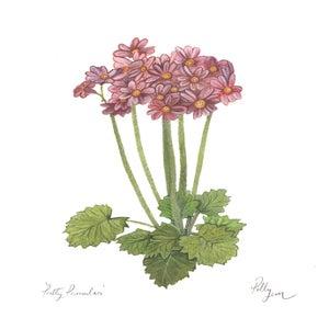 Image of Pretty Primulas - original watercolour painting