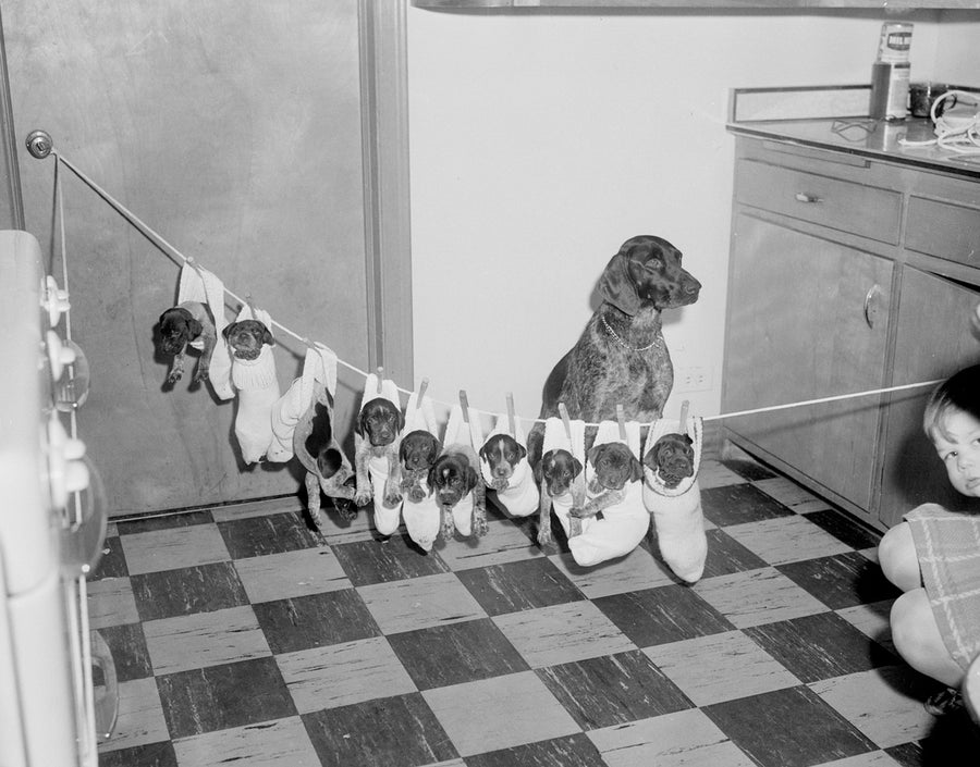 Image of 10 pups in socks on a string: 1960's