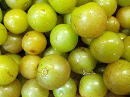 Image of Muscadine