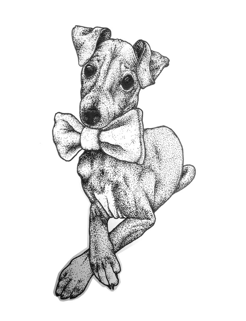 Image of Italian Greyhound