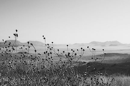 Image of Keeping Watch - Marfa, TX (Davis Mountains)