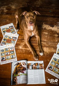 Image of Pawtographed American Dog Magazine