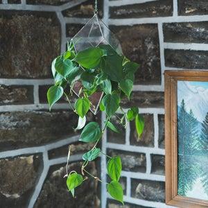 Image of Iridis Terrarium - small, medium, large