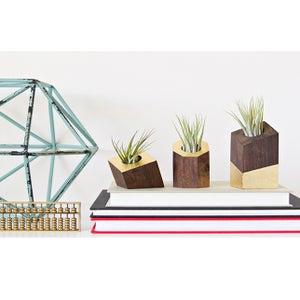 Image of Gold Leaf Air Plant Holder <br>Dark - <i>Plant Included</i>