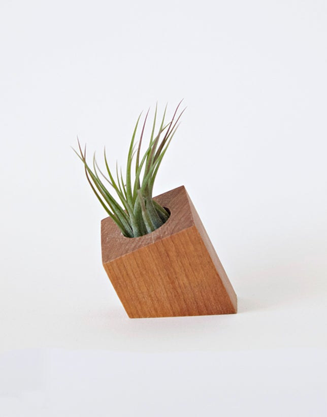 Image of Air Plant Holder - Cropped Diamond Natural - <i>Plant Included</i>
