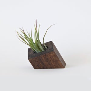 Image of Air Plant Holder - Cropped Diamond Dark - <i>Plant Included</i>