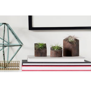 Image of Air Plant Holder - Set of Three Dark - <i>Plants Included</i>