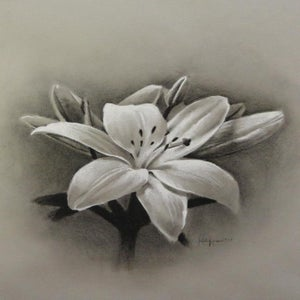 Image of Lily Charcoal ontinted paper. Signed Print