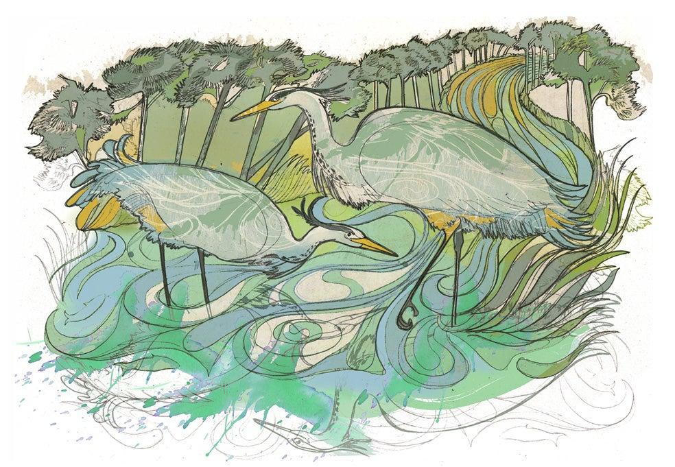 Image of Halcyon Herons