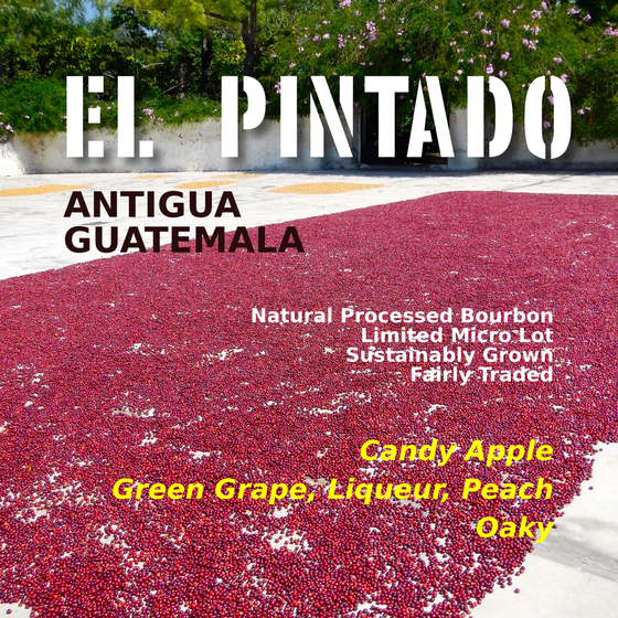 Image of El Pintado, Natural Micro Lot, Antigua, Guatemala