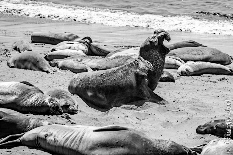 Image of The Sea Lions