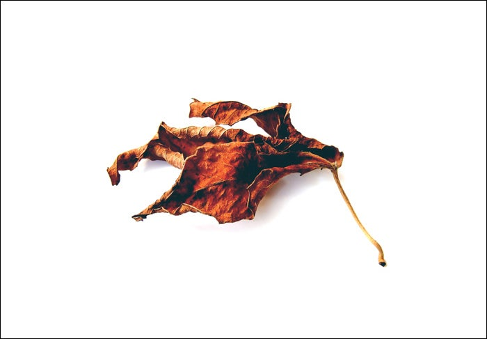 Image of a close look at fallen leaves