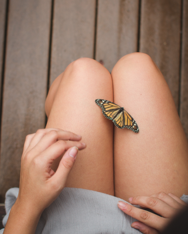 Image of Inmylap: Butterfly