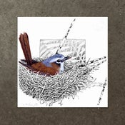Image of Grey Headed Robin - Art Print