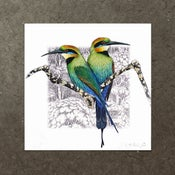 Image of Rainbow Bee Eater - Art Print