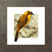Image of Golden Bowerbird - Art Print