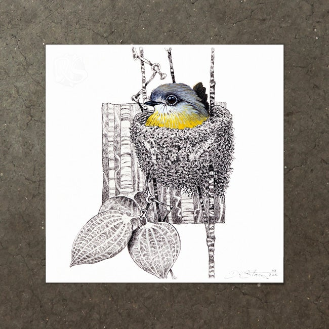 Image of Pale Yellow Robin - Art Print