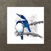 Image of Forest Kingfisher - Art Print