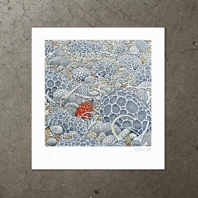 Image of Pandanus Beach - Art Print