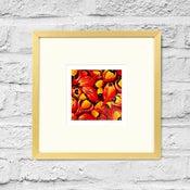 Image of Mischocarpus Exangulatus - Framed Print