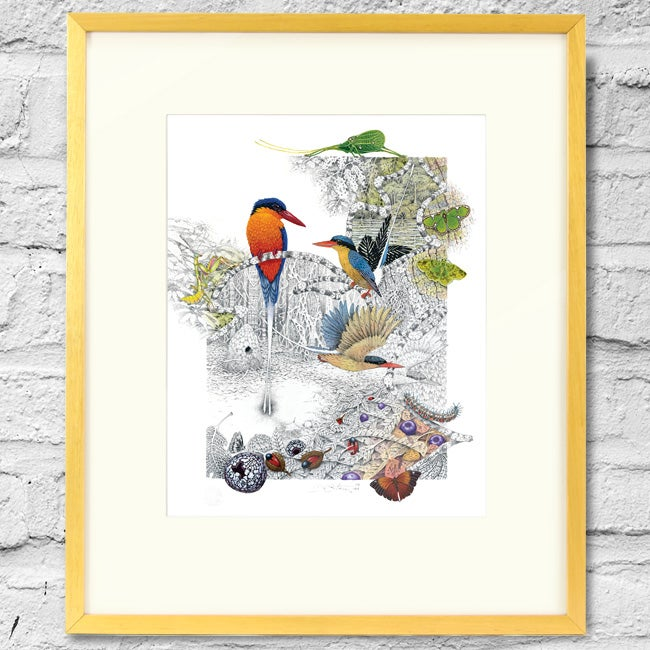 Image of Paradise Kingfisher - Framed Print