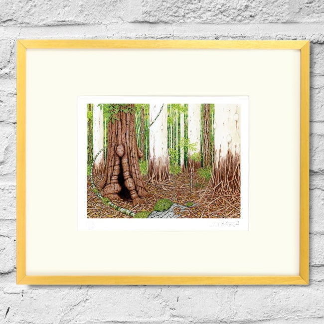 Image of Sclerophyll Forest - Framed Print