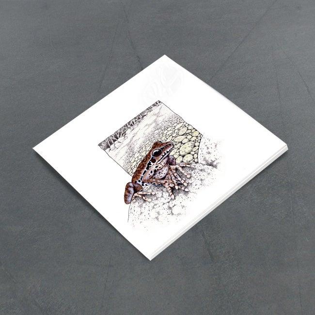 Image of Lesueur's Treefrog - Miniature