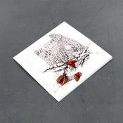 Image of Maiden Vale Mushroom & Nutmeg Seeds - Miniature