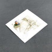 Image of Superb Fruit Dove - Miniature
