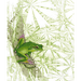 Image of Giant Green Tree Frog - Gift Card