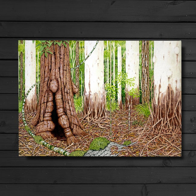 Image of Sclerophyll Forest - Canvas Print