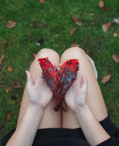 Image of Inmylap: Cardinal Heart
