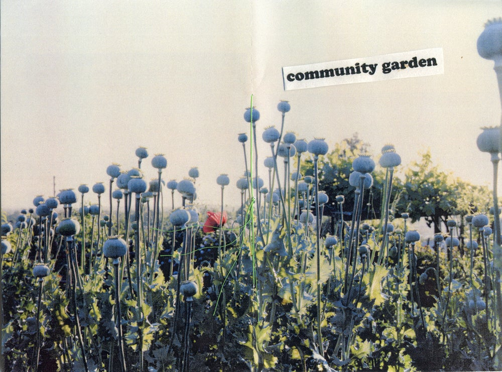 Image of community garden