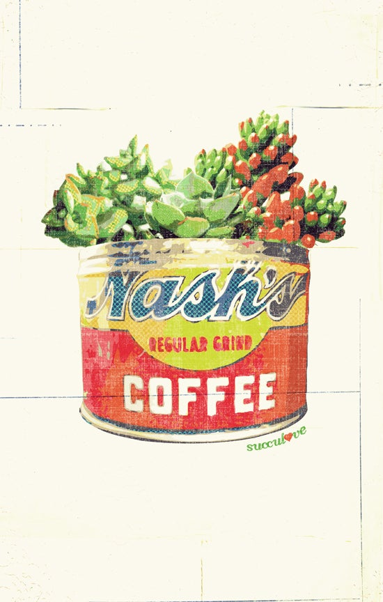 Nash S Succulove