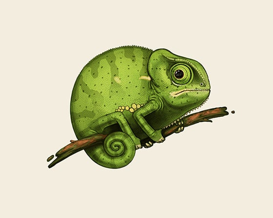 Image of Fat Kingdom - Flap-necked Chameleon