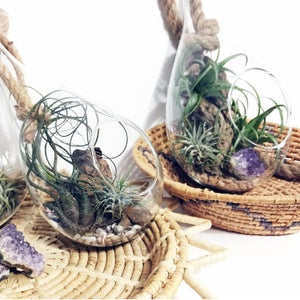 Image of HANGING TERRARIUM
