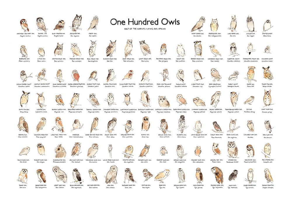 Image of One Hundred Owls
