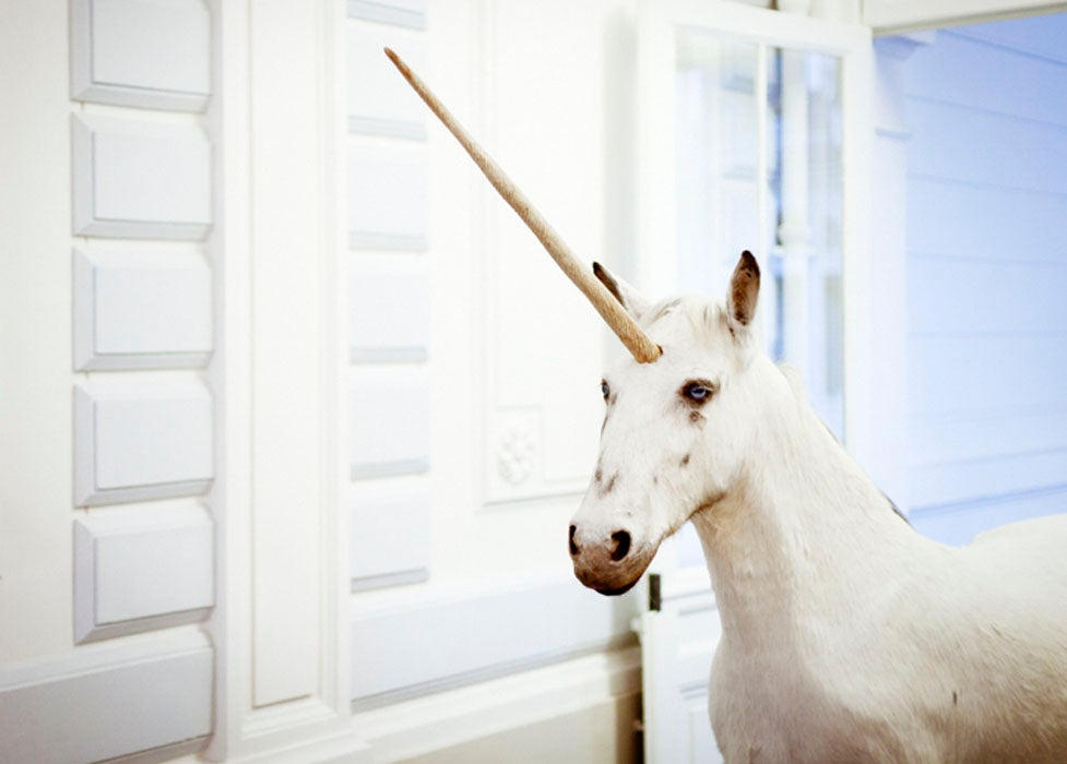 Image of White Unicorn.