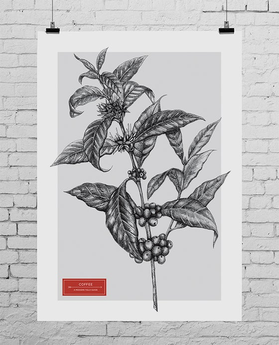 Image of COFFEE: A MODERN FIELD GUIDE - A3 COVER PRINT